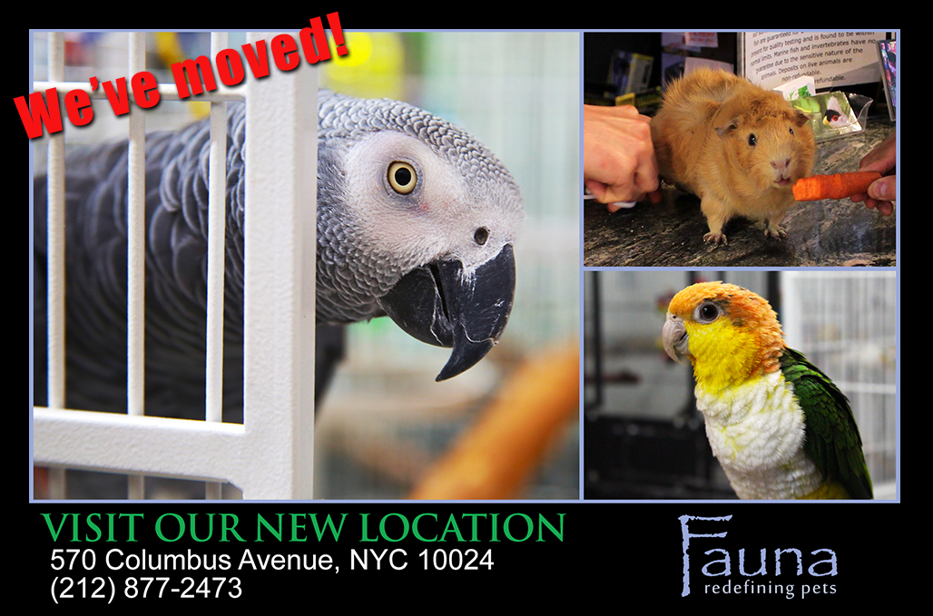 Fauna NYC