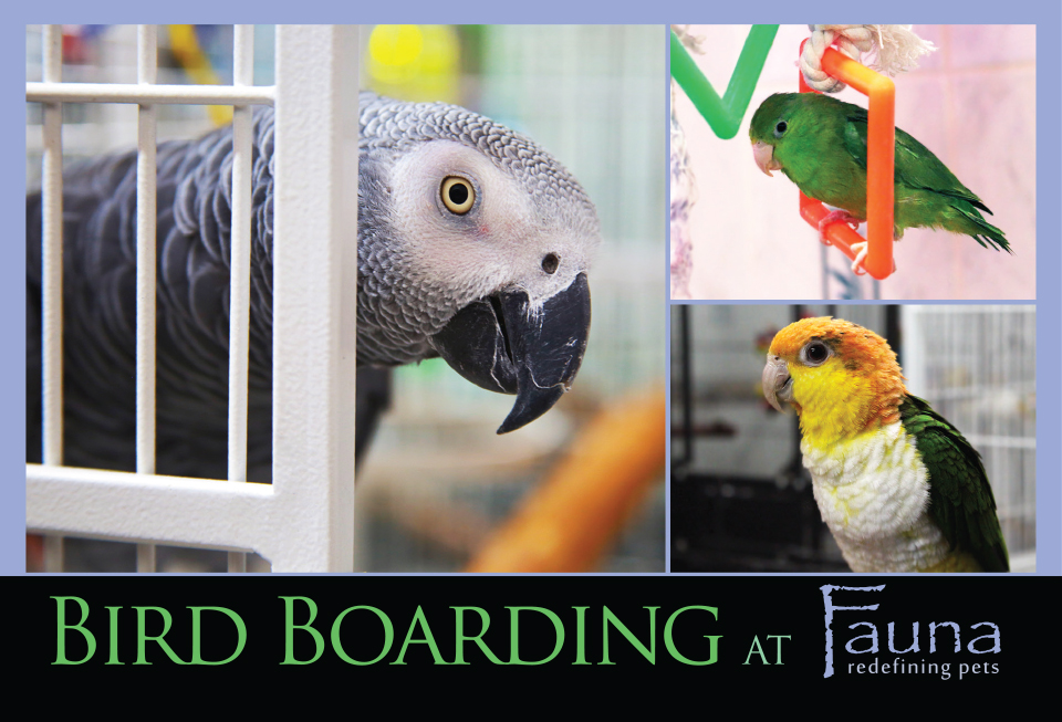Bird Boarding Postcard