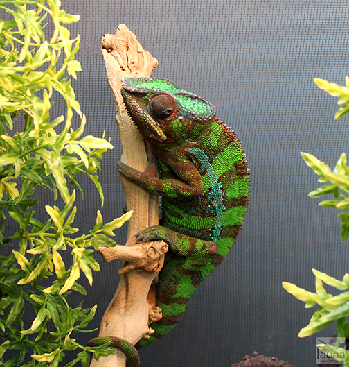 Winter Reptile Humidity Issues