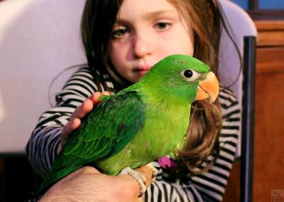 Mueller Parrot